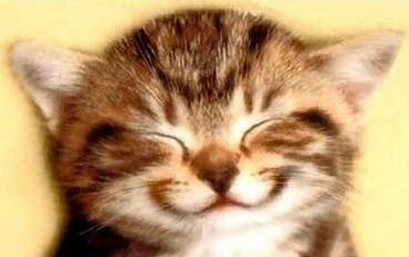 big smile kitten